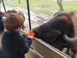 Fun Things to do in Lake Geneva. Families will love the Safari in Lake Geneva with over 50 animals from 5 countries in this conservation ranch just 5 miles from Downtown Lake Geneva.