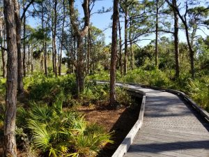 Free Nature Walk in Naples Florida at the Nature Preserve. Walk through a pretty boardwalk and look for small animals and interesting plants. A short and pretty walk through local plants native to Southwest Florida area.