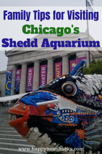 Shedd Aquarium Chicago with Kids. Things to do, where to eat, park, and free days. Families will love visiting Dolphins, Beluga Whales, Penguins and fish. #sheddaquarium, #chicagoattractions, #traveltips,