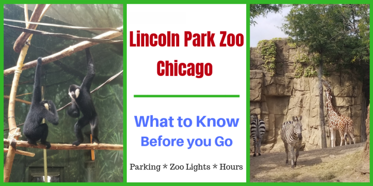 lincoln park zoo lights hours 2020