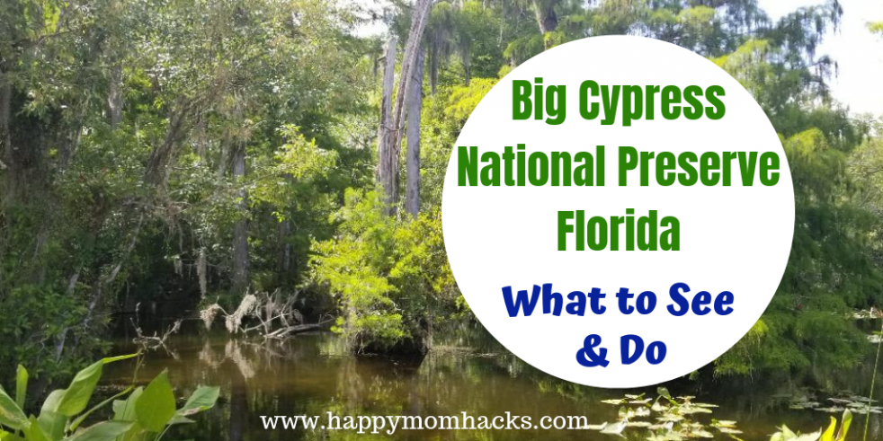 Big Cypress National Preserve Florida. Best things to do on your visit. See the Parks Alligators, birds, and turtles. Check out Big Cypress Gallery to see beautiful Big Cypress Photography. Use this great guide to be prepared for your visit. Plus day trips to Naples and Marco Island #bigcypressnp #familytravel #traveltips #nationalparks #florida