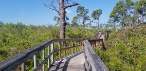 Beautiful Briggs Nature Center in Marco Island Florida. A Free nature walk through the local nature of southwest Florida.
