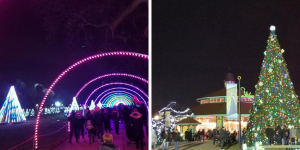 Chicago Holiday Light Displays at the Brookfield Zoo